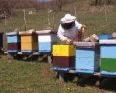 Grad Beograd finansira obuku mladih pčelara