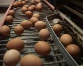 Zbog EU Hrvatska uskoro ostaje bez jaja