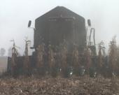 Suša odnela 15 % roda kukuruza
