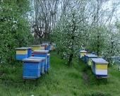 Vreme odgovara pčelama