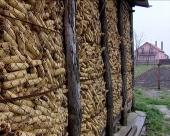 Prihvatljiva cena kukuruza