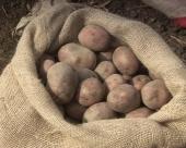 Centar za krompir u Guči