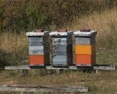 Međunarodni sajam pčelarstva