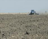 Sve manje parcela pod pšenicom