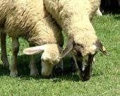 Razvoj stočarstva