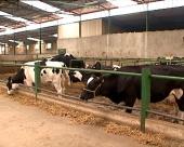 Proizvodnja mleka isplativa