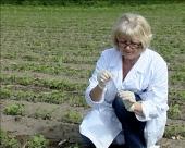 GMO u stočnoj hrani