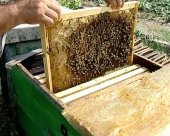 Novi Pravilnik o podsticajima u pčelarstvu