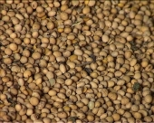 Zahtev za korišćenje GMO