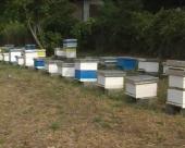 Podsticaji za pčelare u Rekovcu