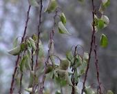 Zaštita stabala od divljači