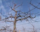 Hladni dani usporavaju vegetaciju