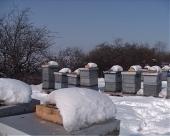 Više subvencija za pčelare