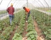 Veće subvencije za povrtare u RS