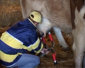 Mleko BiH uskoro u EU