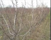 Pravilna prehrana stabala u voćnjacima