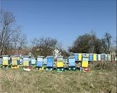 Pčele znače život