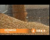 Predstavljamo hidrid kukuruza otporan na sušu