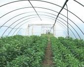 Novi plastenici za ivanjičke povrtare