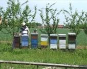 Pčelari u RS očekuju dobru godinu