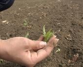 Zaštita suncokreta i soje