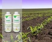 Zaštita kukuruza od konkurencije