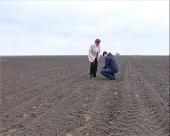 Ogled kukuruza u Futogu