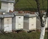 Veće subvencije za pčelare