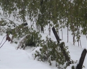 Sneg napravio veliku štetu