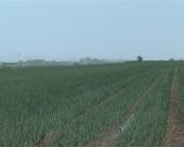 Šansa za poljoprivrednike
