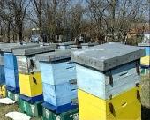 Sprečavanje pomora pčela