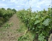 Šumadijski festival vina
