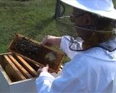 Solidan profit od pčelarstva