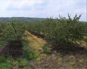 Zaštititi voćnjake