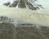 Kako oporaviti zemljište?