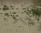 Preporuke za ratare pogođene poplavama