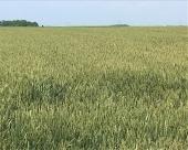 Podsticaji za biljnu proizvodnju