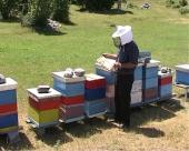 Veća otkupna cena meda