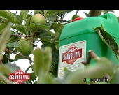 Slavol VVL u proizvodnji jabuke