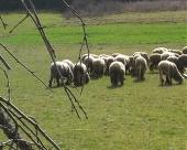 Stanje u ovčarstvu
