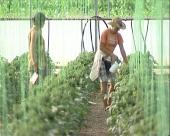 Novih 60 mladih u poljoprivredi
