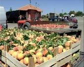 Neujednačene cene voća na pijacama