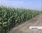 Soja, suncokret i kukuruz na većini parcela pokazuju da su u dobrom stanju