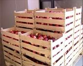 Rusi zainteresovani za šumadijsko voće