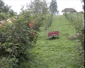 Kupine u Gojnoj Gori
