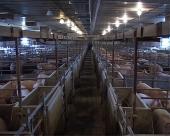 Povećan izvoz hrane