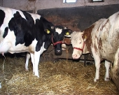 Povoljni poljoprivredni krediti