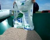 Setva pšenice na pomolu