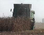 Ambari puni kukuruza