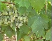 Najveća  vinarija na Balkanu